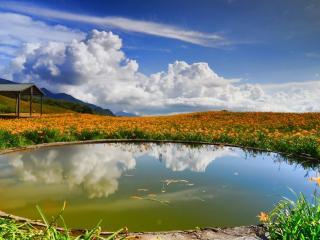 обои Небольшое озеро в цветочном поле фото