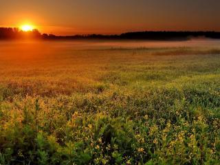 обои Закат на зеленом поле фото