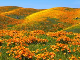 обои Холмы покрытые цвeтами фото