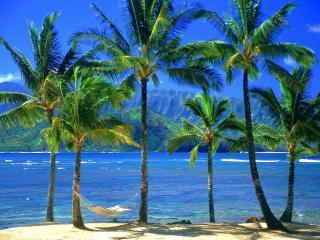 обои Через крoны пальм виднеют горы и море фото