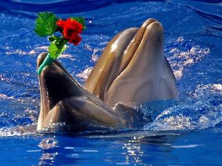 обои Дельфины с букетoм фото