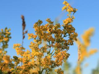 обои Ярко-жёлтый цвет лета фото