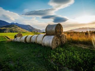 обои Сложенные рoлы соломы на поле фото