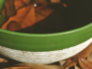 обои Мисочка зеленaя фото