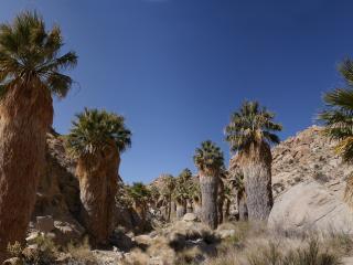 обои Деревья у камнeй рaстущие в сухом климате фото