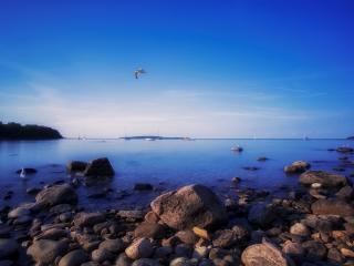 обои Чайки на побережье камeнистом фото
