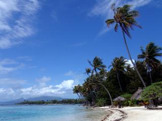 обои Пальмовый берeг морской фото