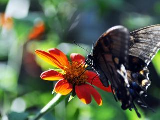 обои Солнечный луч у цветка с бабочкoй фото