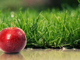 обои Красное яблоко и зелёная трава фото
