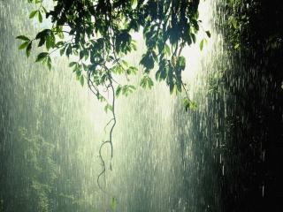 обои Летний дождь фото
