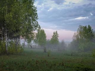 обои для рабочего стола: Майское утро в лесу