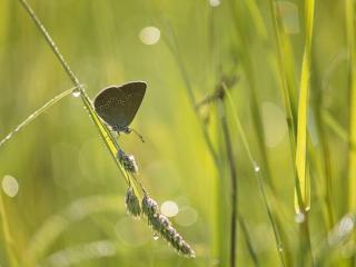 обои Бабочка в траве фото