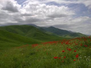 обои Весенние маки в горах фото