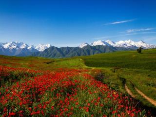 обои Весенний Тянь-Шань в горах фото