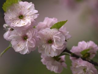 обои Весна в розовых тонах. фото
