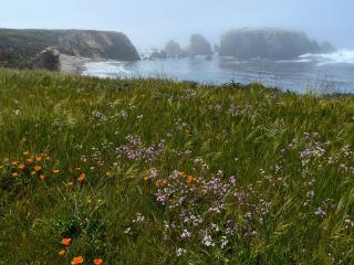обои Чудесная лужайка у самого моря фото