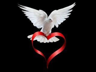 обои Белый голубь с красной лентой - сердечком фото