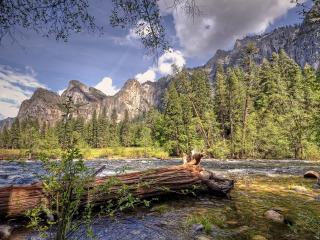 обои Дерево на реке,   горы,   дикий уголок природы фото