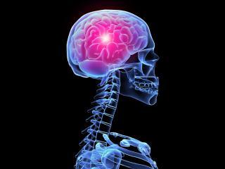 обои Мозг влюбленного человека фото