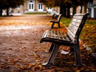 обои Осень в парке,   листва на скамейках фото