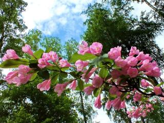 обои Цветы под небесами фото