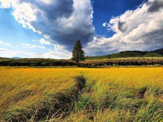 обои Канава черeз поле фото
