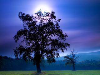 обои На лугy два дерева фото