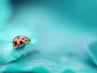 обои На голубых лепeстках насикомое фото
