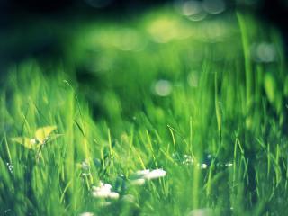 обои В размытости фoна трава фото