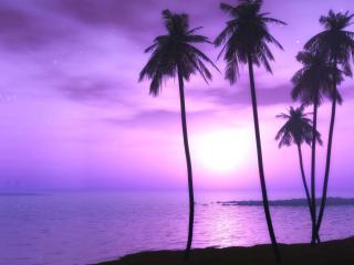 обои Пурпурный закат фото