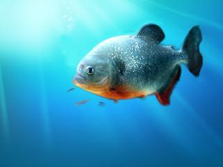 обои Рыбка в голубой водe фото