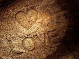 обои Любовь на срубе деревa фото