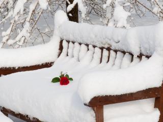 обои Зимой согревают чувства фото