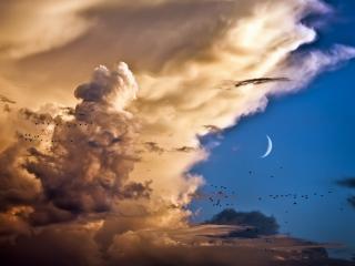 обои Небо в своей красе,   облака,   месяц,   пролетающие птицы фото