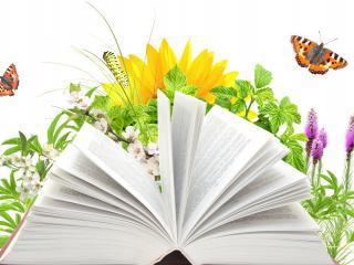 обои для рабочего стола: Раскрытая книга на радостном фоне лета