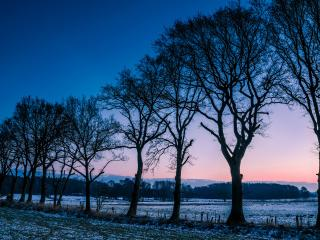 обои Ряд стройных деревьев на закате, изморозь, зима фото