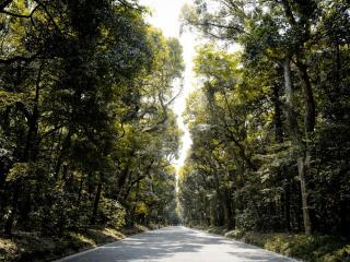 обои для рабочего стола: Дорога через старый лес