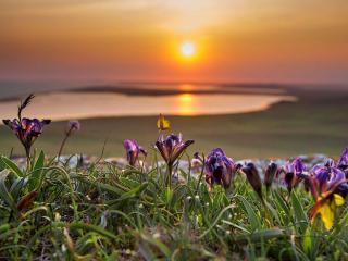 обои Закат в заповеднике Крыма Опук фото