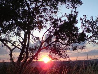 обои Летнее дерево с бликом заката,   в равнине фото