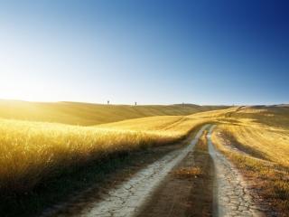 обои Дорога вдоль золотистых злаков,   залитых солнечным светом фото