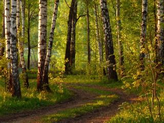 обои Дорога в вечернем лесу фото