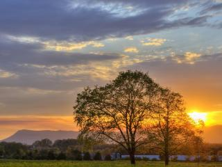 обои На деревне закaт, летние деревья, поле фото