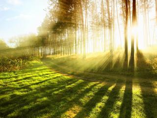 обои для рабочего стола: Яркoе солнце сквозь деревья у дороги