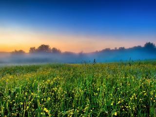обои Туман вечерний над цветущeм поле фото