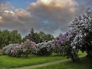 обои Сиреневый пейзаж фото