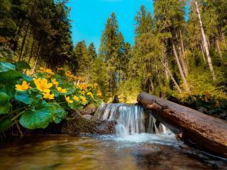 обои Весна в карпатах у ручья фото