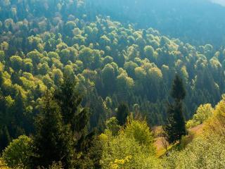 обои Зелень карпатских гор фото