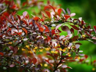 обои Красота ярких листьев на ветви фото
