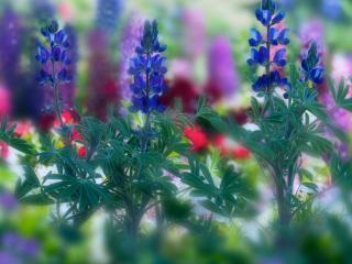 обои Красочные летние полевые цветы фото