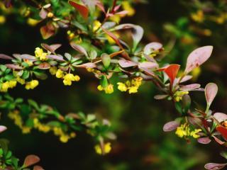обои Красочные листья  на ветви летнего куста фото
